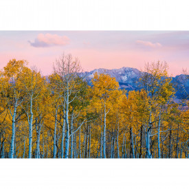 Valokuvatapetti Birches and Mountains DD118912 A.S. Création Designwalls