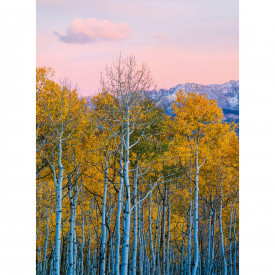 Valokuvatapetti Birches And Mountains DD119071 A.S. Création Designwalls